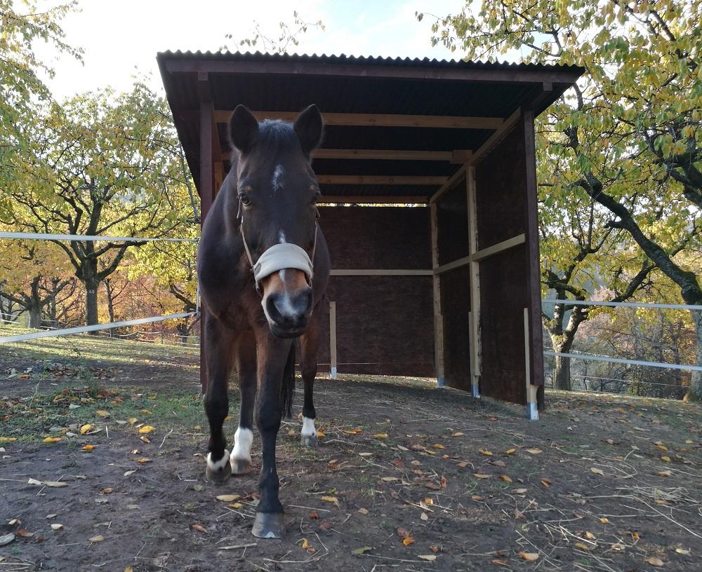 Pferdeunterstand aus OSB Platten
