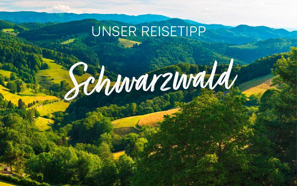 Reisetipp: Schwarzwald | Holz-Hauff in Leingarten