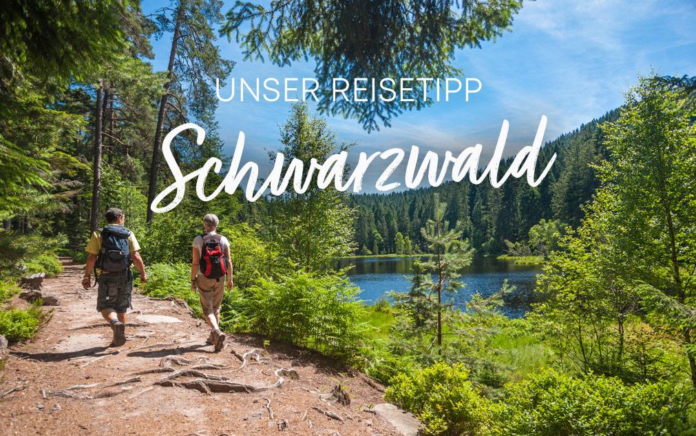 Reisetipp Schwarzwald 2.0 | Holz-Hauff in Leingarten